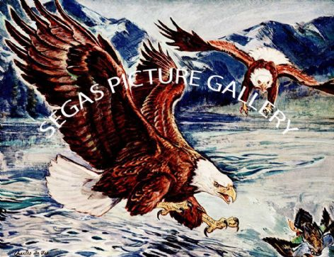 Fine Art Print of the Bald Eagle by Charles Defeo (1891-1978)